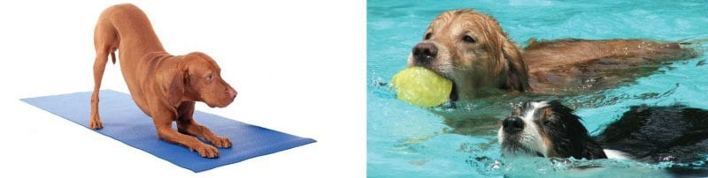 dog yoga dogs swimming