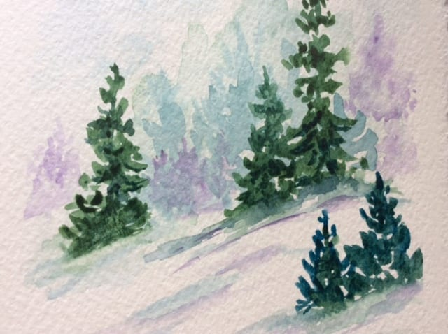 evergreen trees in the snow